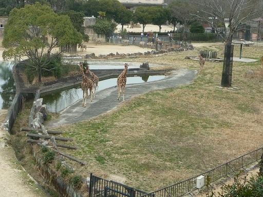 4-zoo (2).JPG