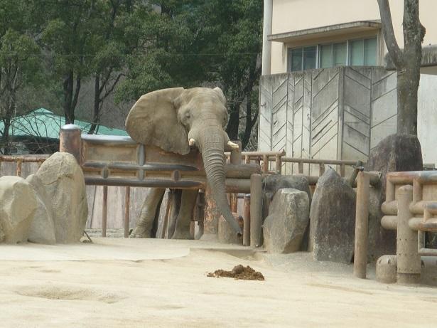 6-zoo (4).JPG