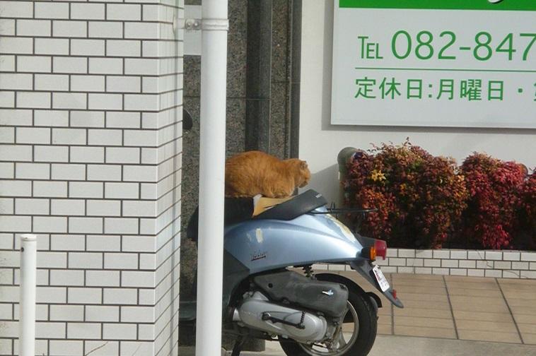 猫2 (1).JPG