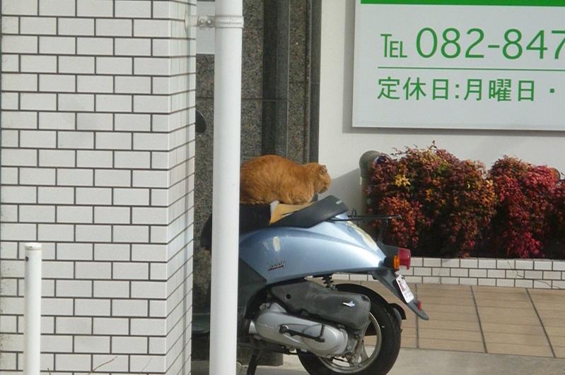 猫2 (2).JPG