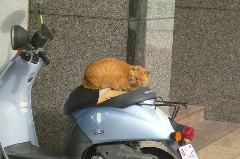 近くで猫 (2).JPG