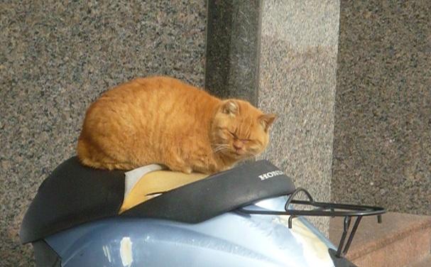 近くで猫 (3).JPG